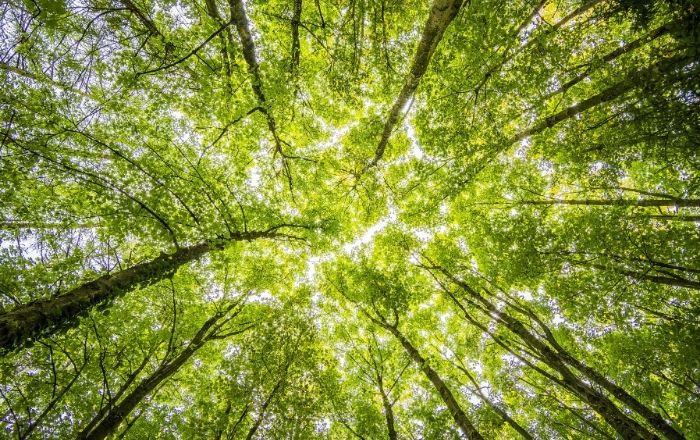 Kuvituskuva, jossa puun latvat kurottavat kohti taivasta.