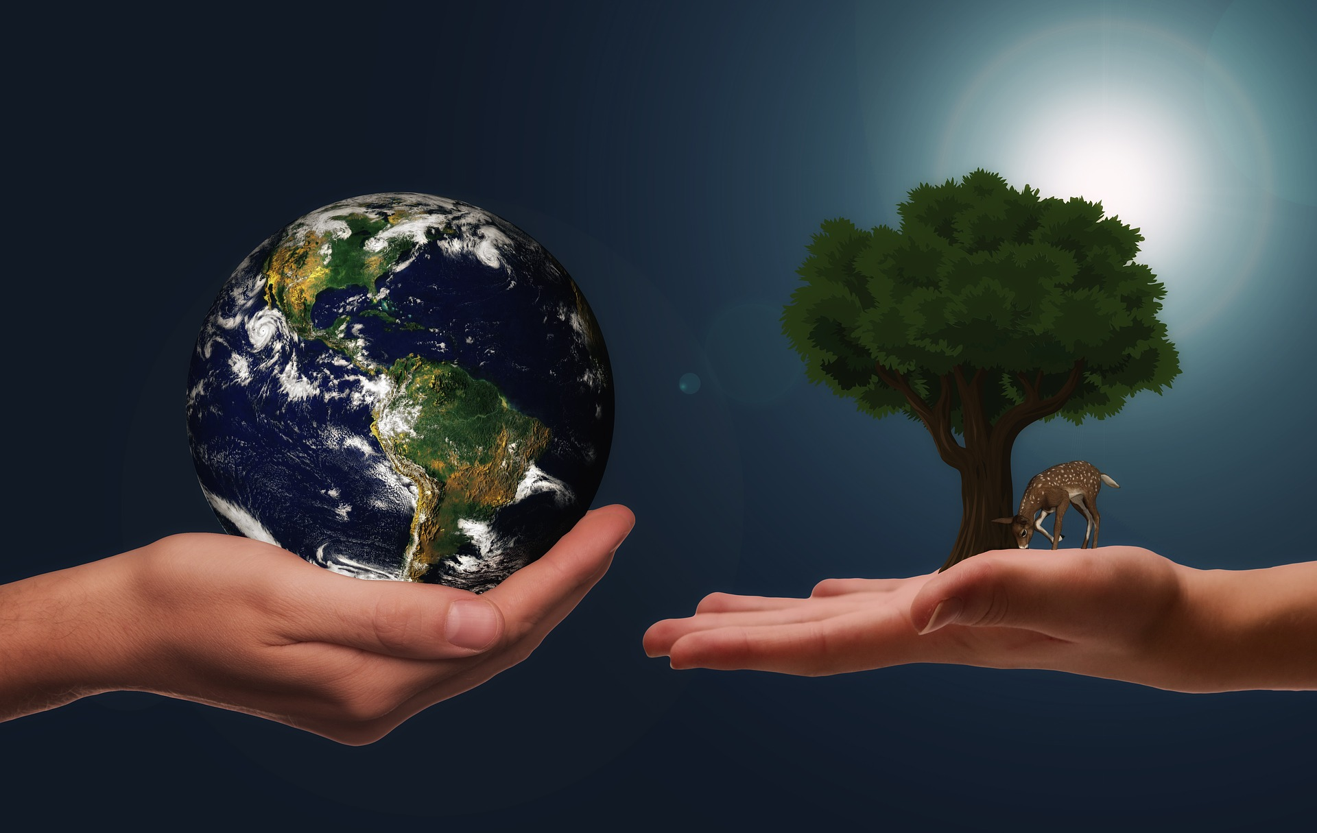 Kuvassa maapallo ja vehreä puu.